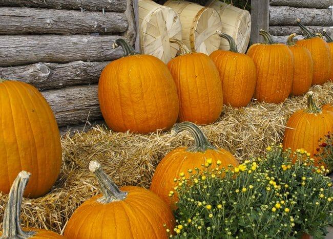 It's pumpkin season at the Farmer's Market.